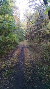 Oct 2014 trail cleanup 2